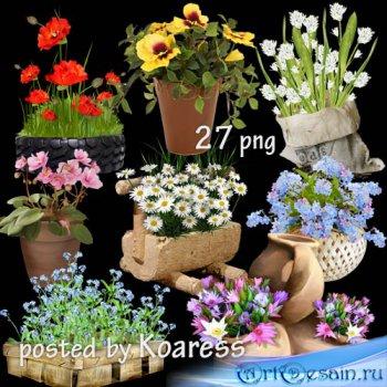 Садовые и комнатные цветы в корзинах, вазонах, горшках - клипарт на прозрач ...