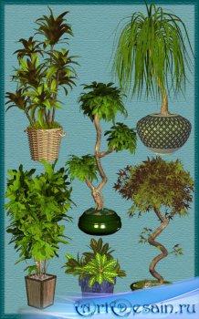 Комнатные пальмы и кустарники