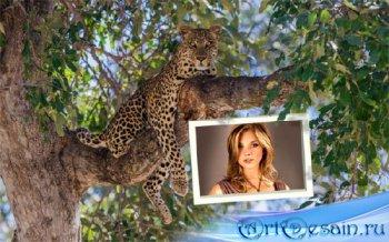 Фото рамка - Дикий леопард на дереве