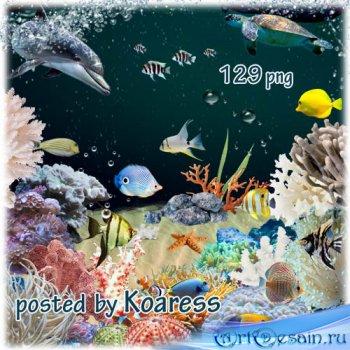 Подборка клипарта png на тему коралловый риф - кораллы, водоросли, тропичес ...