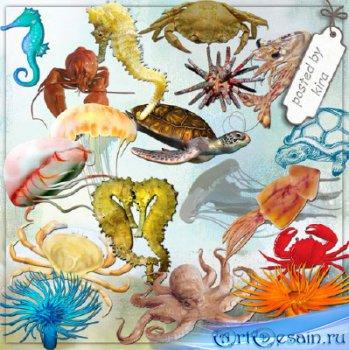Клипарт для оформления - Крабы, морские коньки, осьминоги, медузы и другие  ...