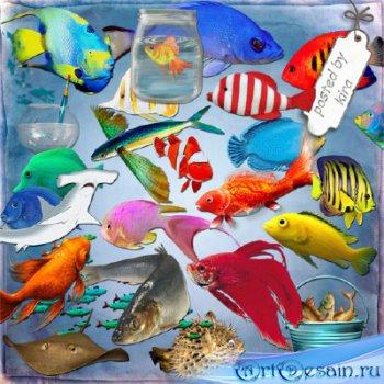 Морской клипарт - Разнообразные рыбки, акулы, аквариумы