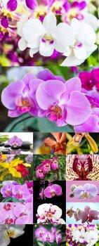 Красавицы орхидеи - растровый клипарт
