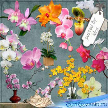 Клипарт в png - Орхидеи