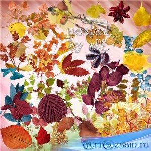 Клипарт в png - Осенние листья