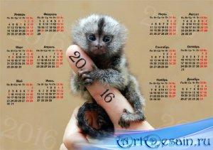 Календарь 2016 - Милая обезьянка