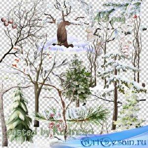 Клипарт на прозрачном фоне - Зимние деревья и ветки