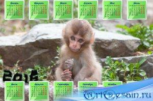 Милая обезьянка на камне - Красивый календарь