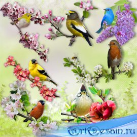 Клипарт – Птицы весной