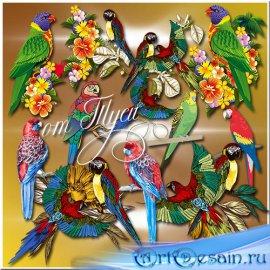 Детский клипарт - Попугаи