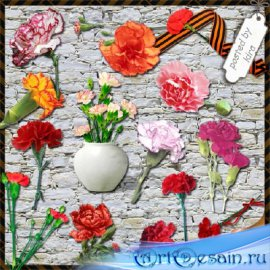Клипарт цветочный - Гвоздики