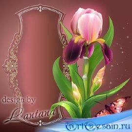PSD исходник - Лилово-розовый ирис прекрасный, как услада рая