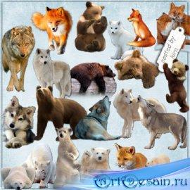 Клипарт - Волки, лисы и медведи, часть 2