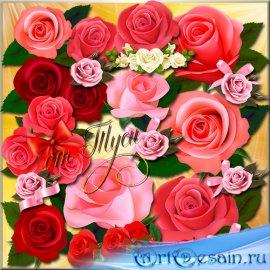 Клипарт - Нежная роза