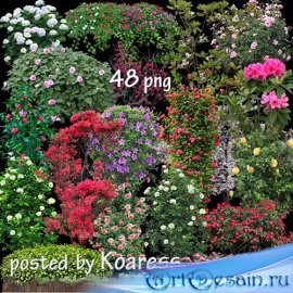 Png клипарт для фотошопа - Цветущий сад