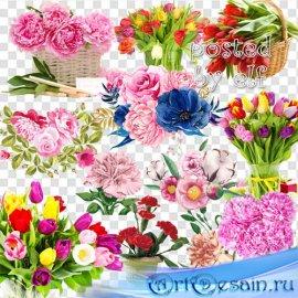 Тюльпаны, пионы, гвоздика на прозрачном фоне