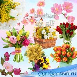 Клипарт без фона - Весенний радостный букет
