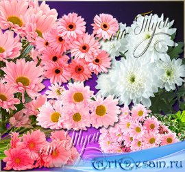 Clip Art - Chrysanthemum - Queen of autumn flowers
