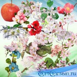 Цветущие ветки вишни, яблони и других деревьев - клипарт в png