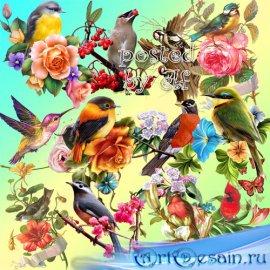 Птицы - клипарт без фона