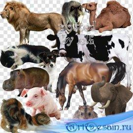 Животные на прозрачном фоне 2