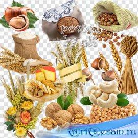 Зерно и злаки, орехи и желуди на прозрачном фоне в PNG
