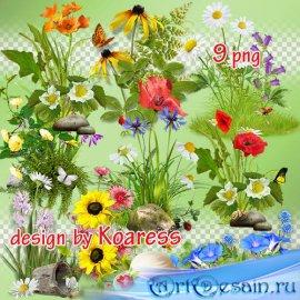 Летний png клипарт для коллажей - Цветочные кластеры, элементы полян