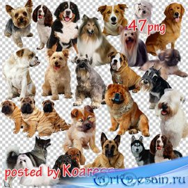 Png клипарт - Собаки и щенки различных пород