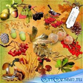 Клипарт осенний - Плоды и семена, часть 2