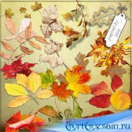 Клипарт - Осенние листья