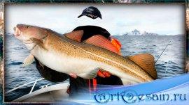 Шаблон для фото - Рыба моя
