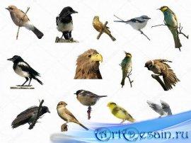 Клипарты на прозрачном фоне -  Разнообразные птицы