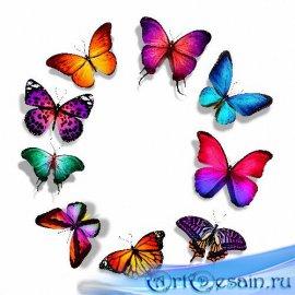 Качественные клипарты на прозрачном фоне - Цветные бабочки