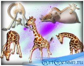 Красивые png - Смешные жирафы