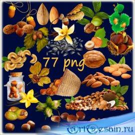 Клипарт в PNG на прозрачном фоне - Орешки жёлуди семечки