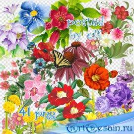 Клипарт на прозрачном фоне – Цветы, цветочные композиции
