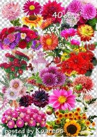 Подборка клипарта png на прозрачном фоне - Осенние цветы, букеты, композици ...