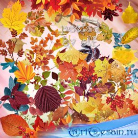 Закружилась листва золотая - подборка клипарта на прозрачном фоне