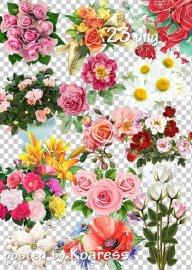 Подборка клипарта в png - Цветы, букеты