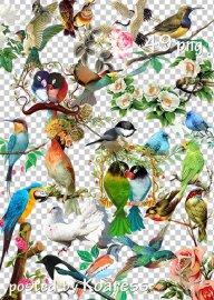 Клипарт png - Цветы и птицы