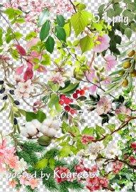 Tree branches, flowers, leaves png - Ветки деревьев, цветы, листья в png
