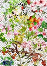 Tree branches, flowers, leaves png part 2 - Ветки деревьев, цветы, листья н ...