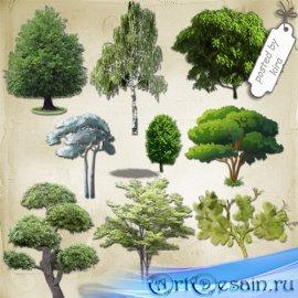 Клипарт - Летние деревья с зеленой листвой